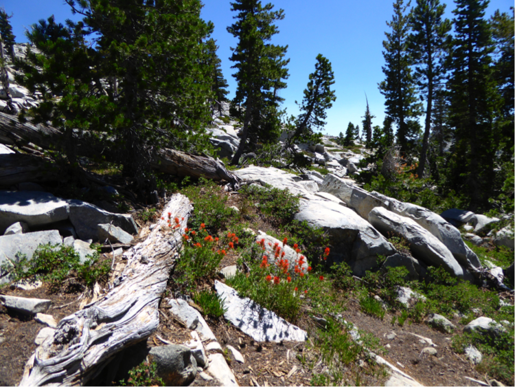 Photo of Desolation Wilderness by Jean Jackman