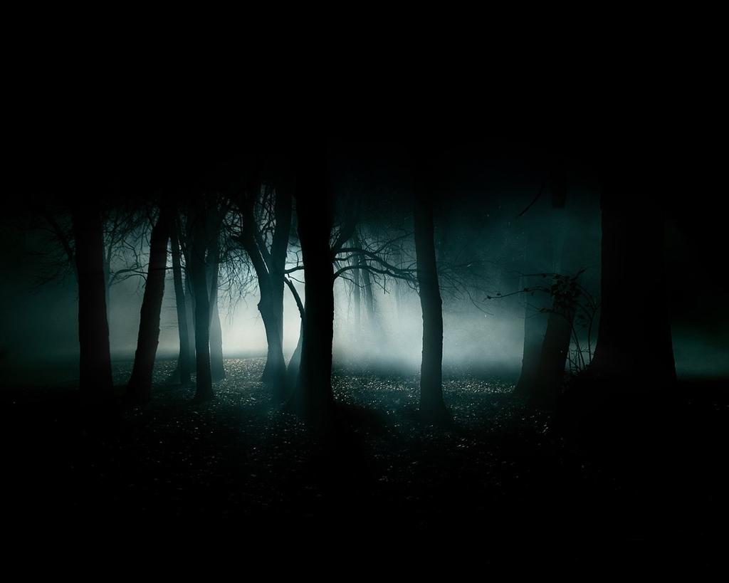 dark-forest-night-image-31002.jpg