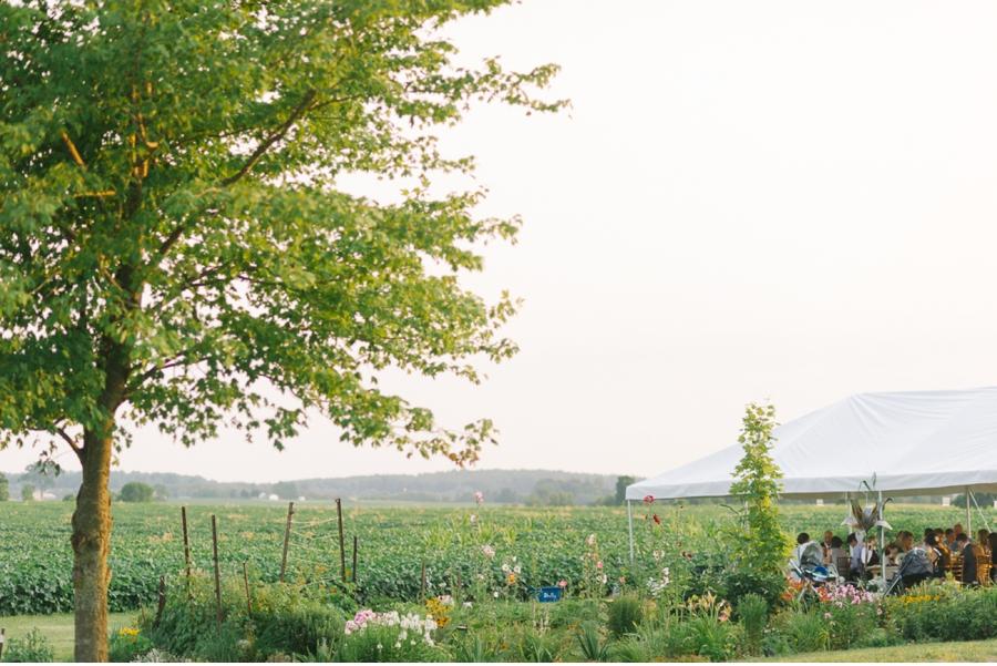 Wedding-in-cornfield-at-dusk