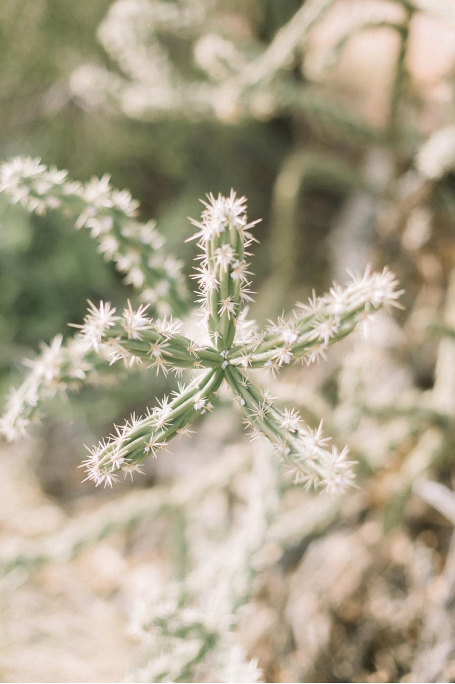 cacti-desert-wedding-ideas