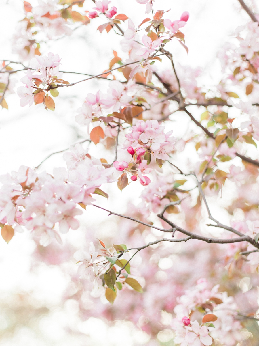 Spring-Blossoms-in-Canada
