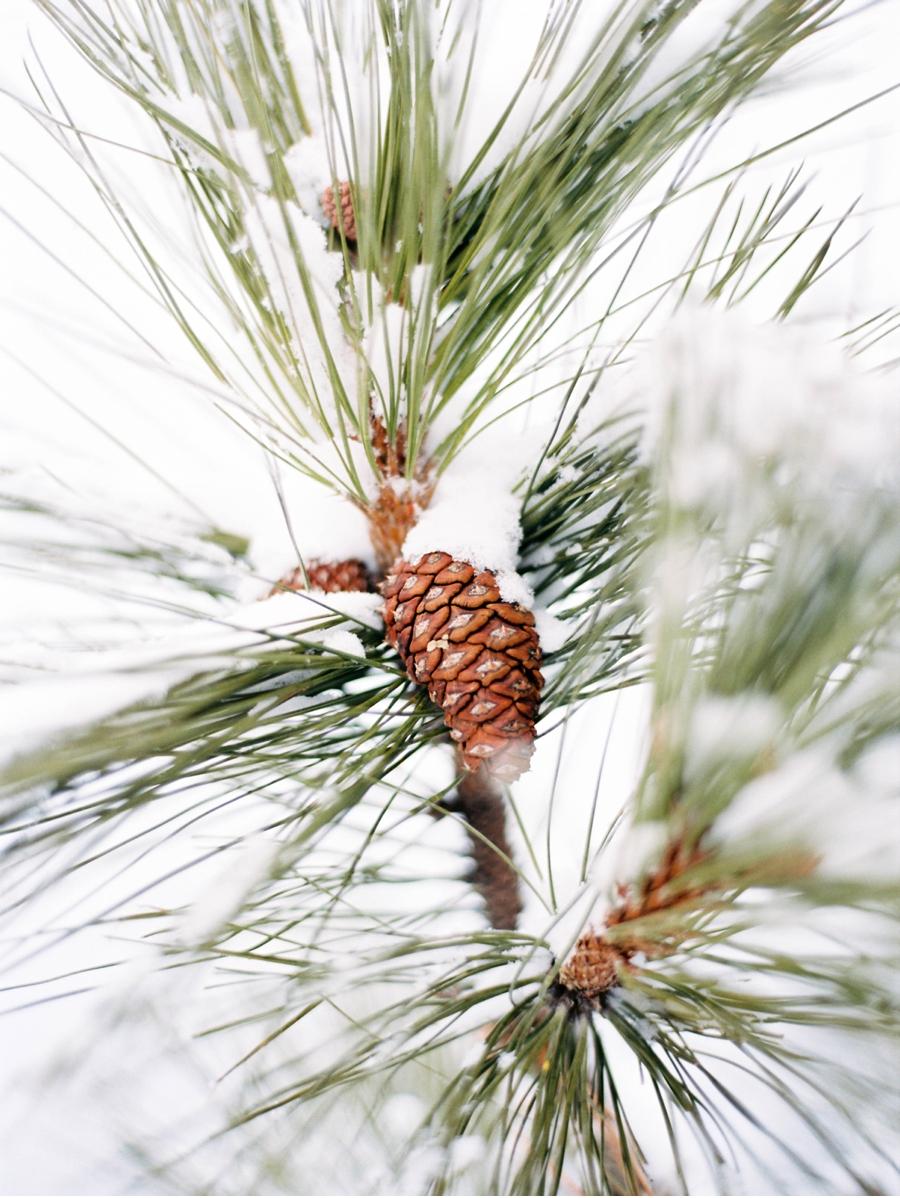 Pinecone-Detail-Winter-Wedding-British-Columbia