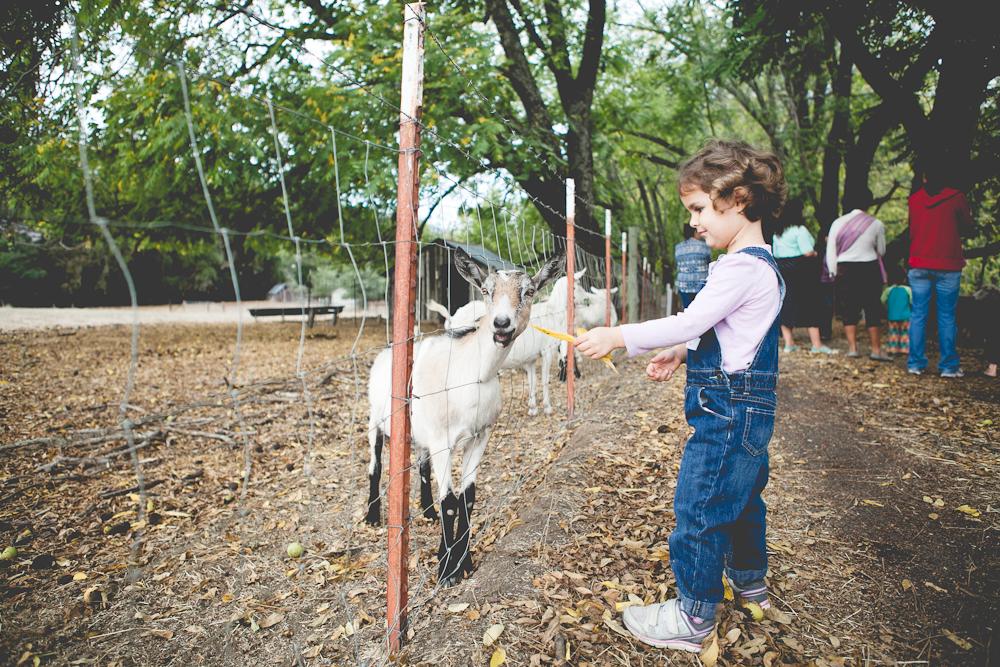 farm-18.jpg