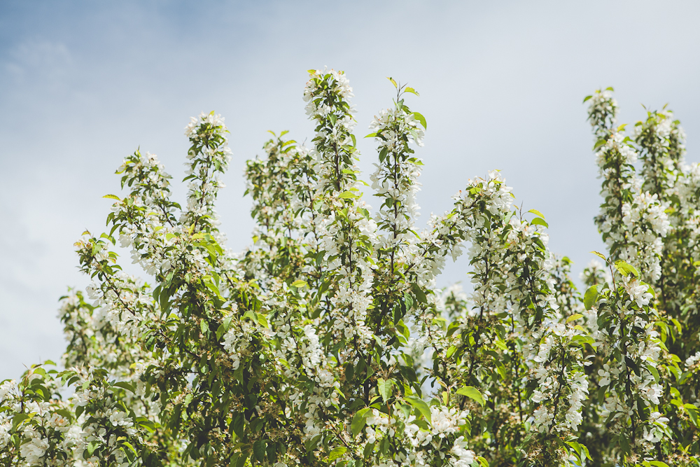 Grand Teton-4.jpg