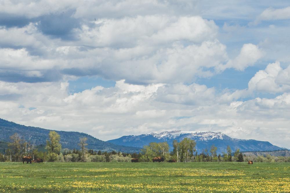 Grand Teton-37.jpg