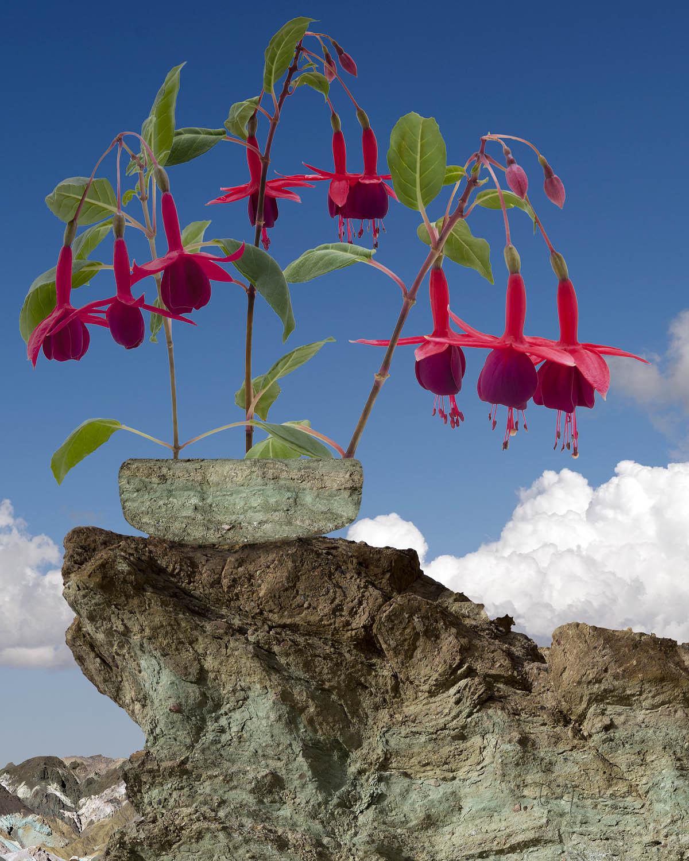 Fuchsias on the Rocks