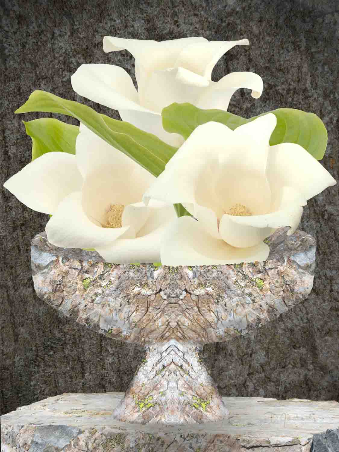 Magnolias With the Sedimentary Rock Vase