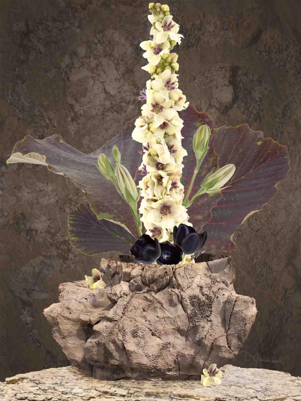 Verbascum With the Lava Vase