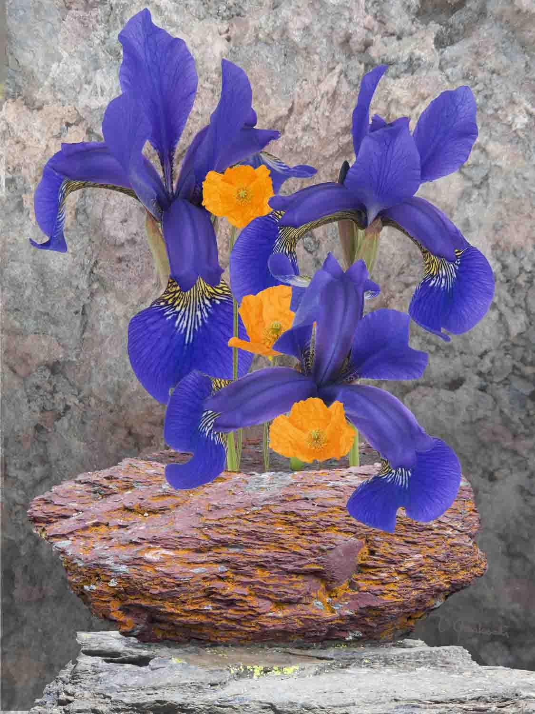 Iris With a Red Argillite Vase