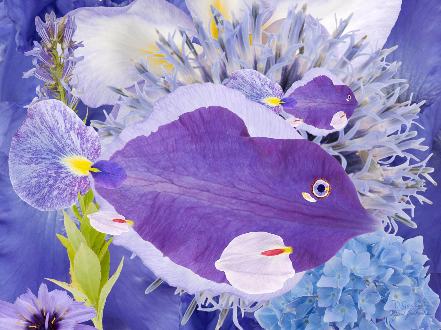 Purple Petal Fish