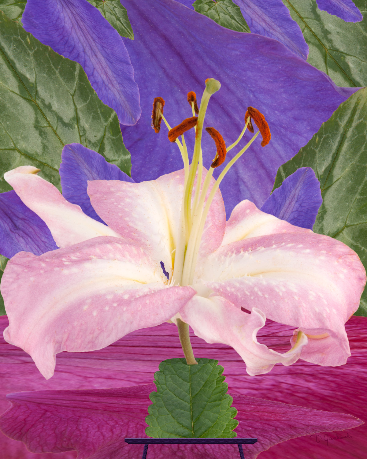 The Oriental Lily