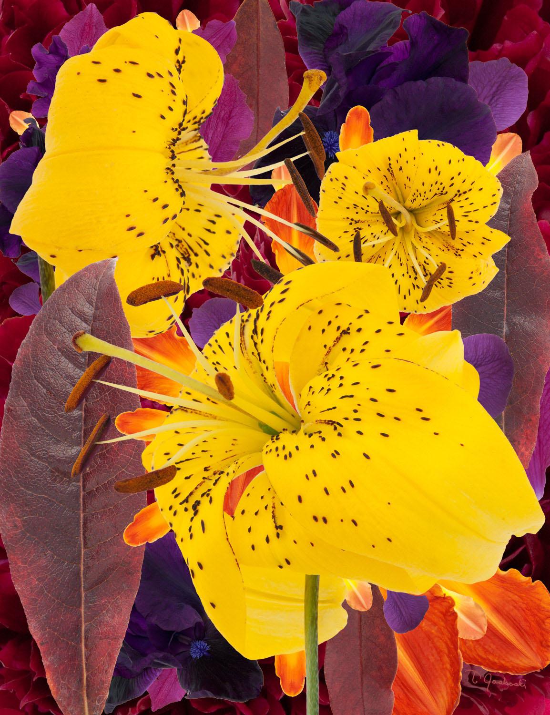 Yellow Lilies' Sunrise Celebration