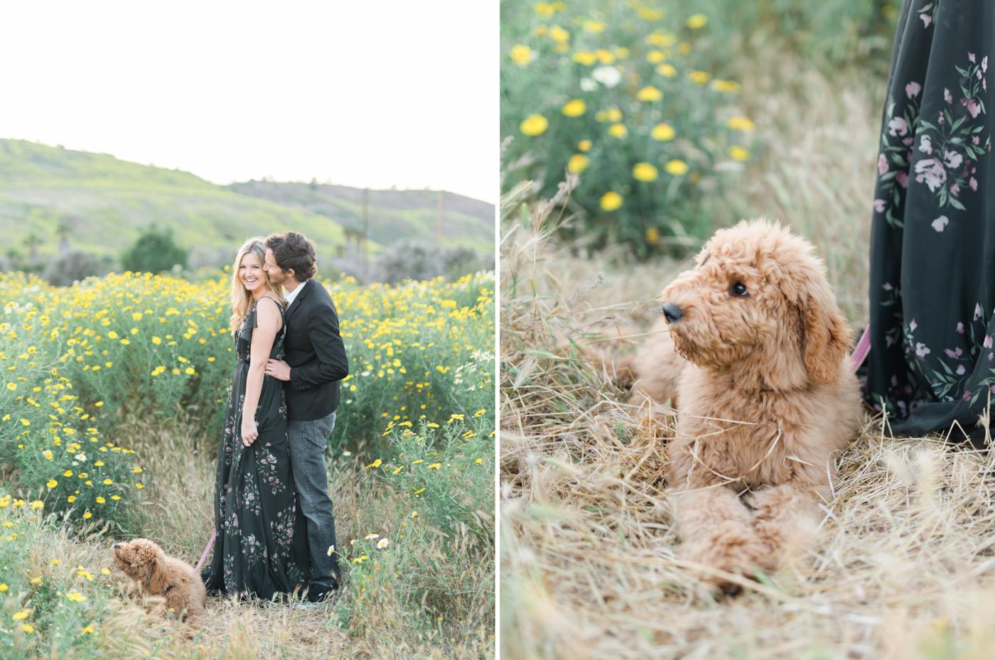 San_Juan_Capistrano_Goldendoodle_family_portrait_session_los_angeles_wedding_photographer-19.jpg