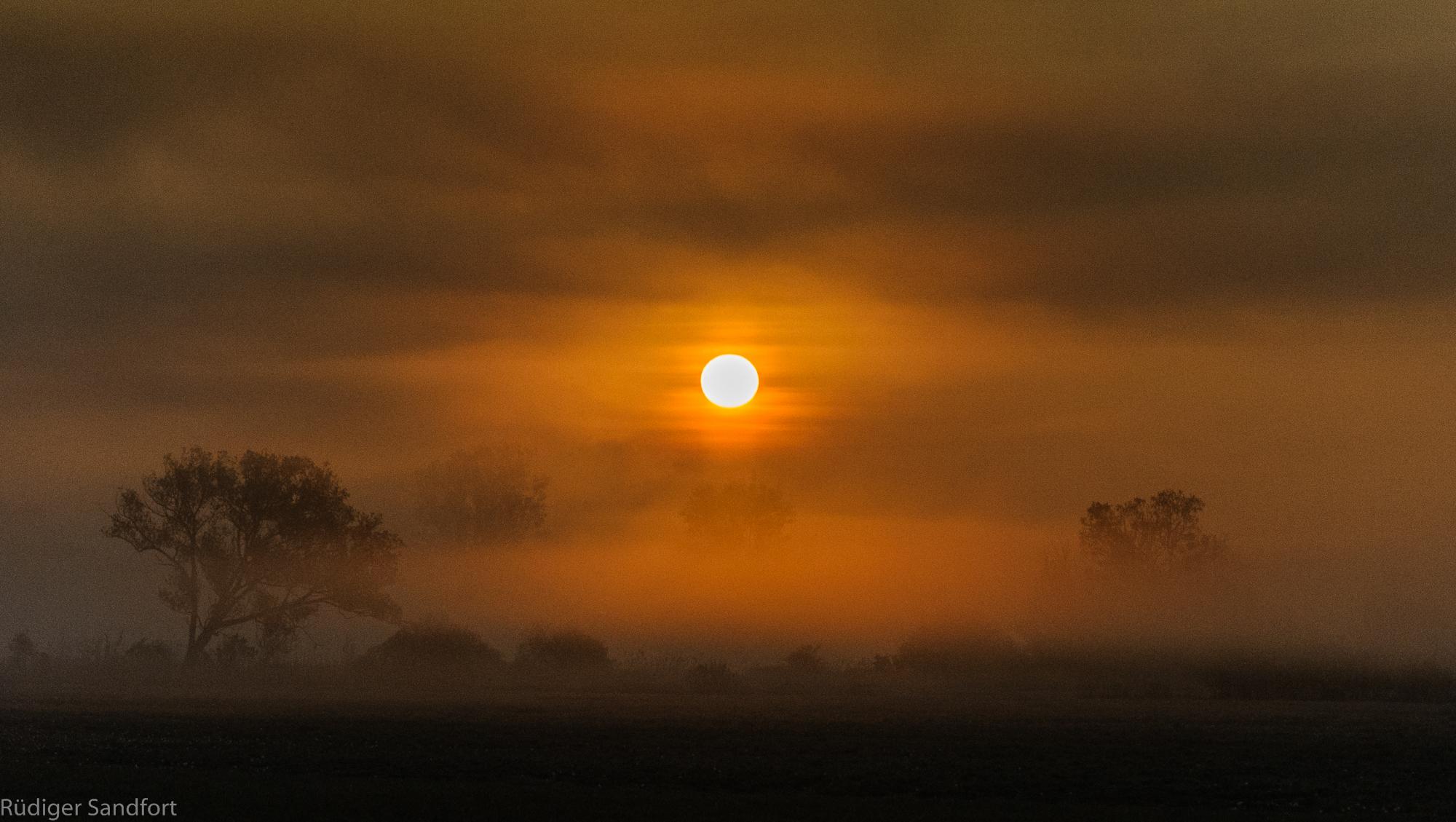 Sunrise / Natur - Reserve Kiebitzwiese