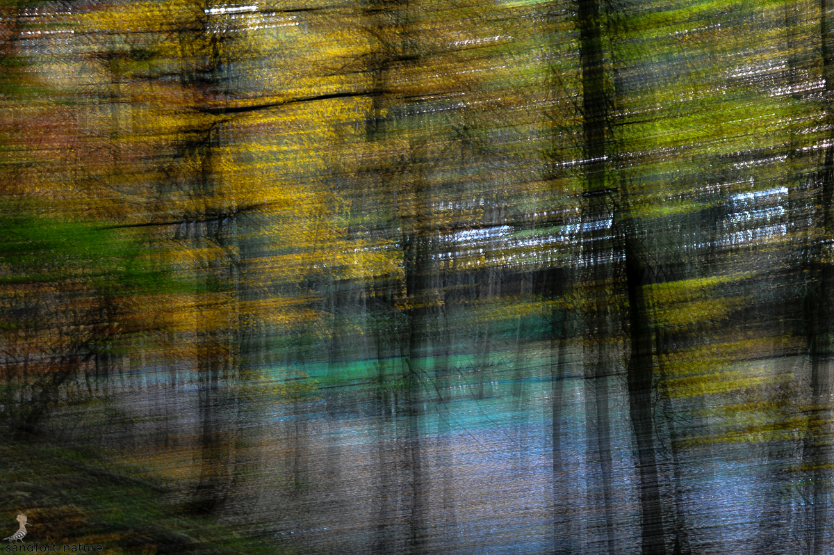 Movement in fall