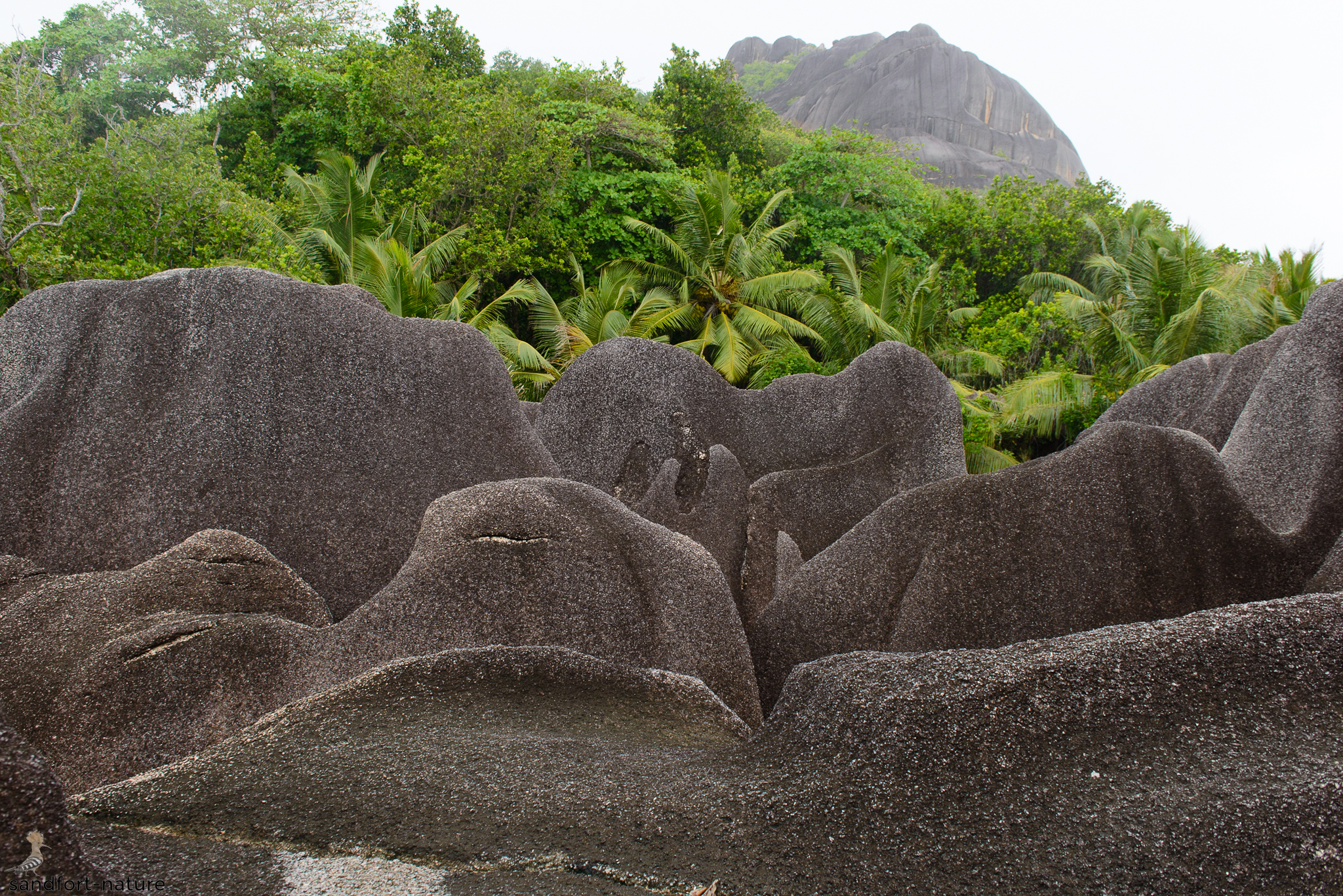 Seychelles-6042.jpg