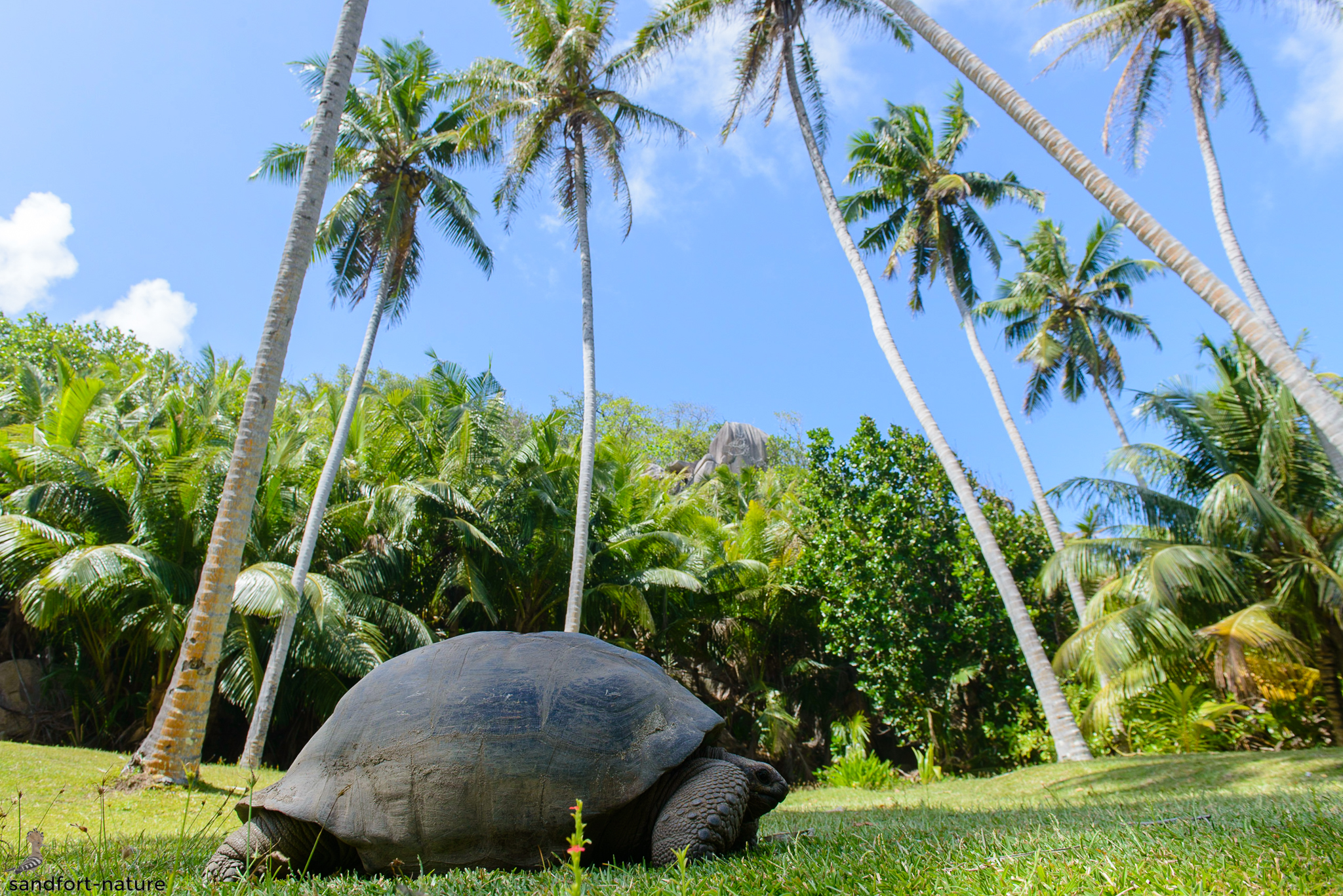 Seychelles-6620.jpg