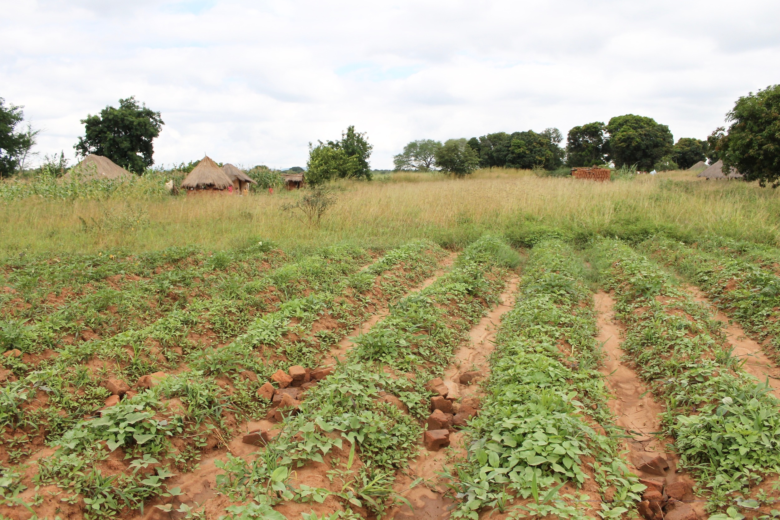 We all admired the new crop of sweet potatoes being grown in the village, made possible by Village Twist Bracelet sales for women to buy seed and fertilizer.