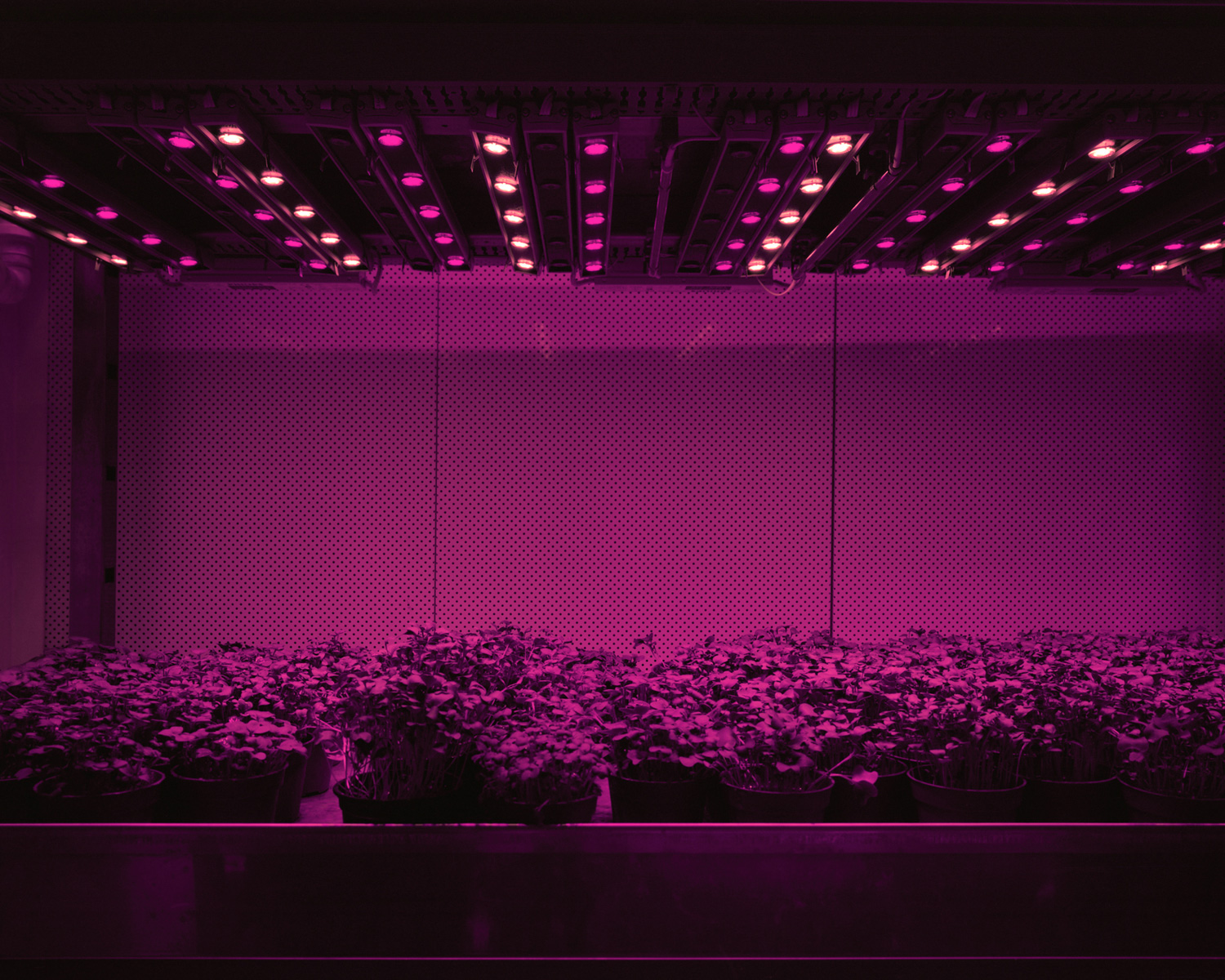 Cress, 2011  Cress, tomatoes, cucumbers, or lettuce are grown in closed systems just with LED lights. There is no sunlight and no direct exchange of air with the outside. Day and night, summer and winter stop existing. Humans are able to determine the shape, taste and colour of plants and fruits. They can be grown anywhere from the desert to inside of restaurants and supermarkets.