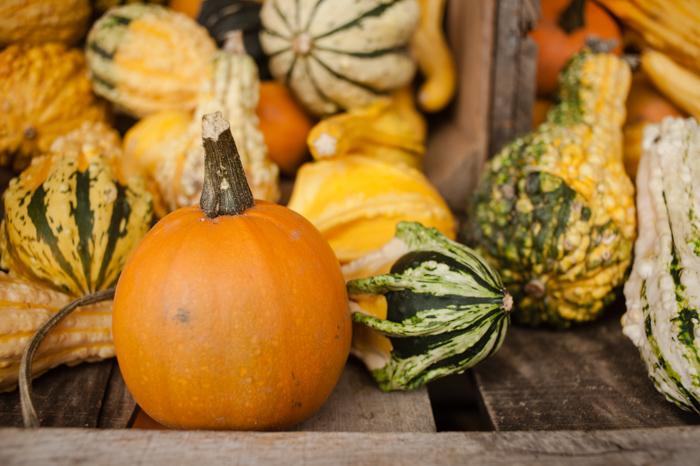pumpkins and gourds, Hogan's Cider Mill in Burlington, CT