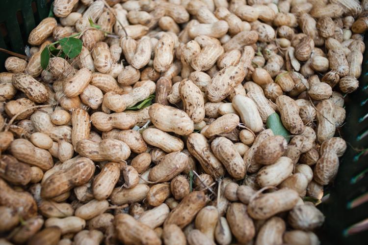 peanuts, Ballard Farmers Market