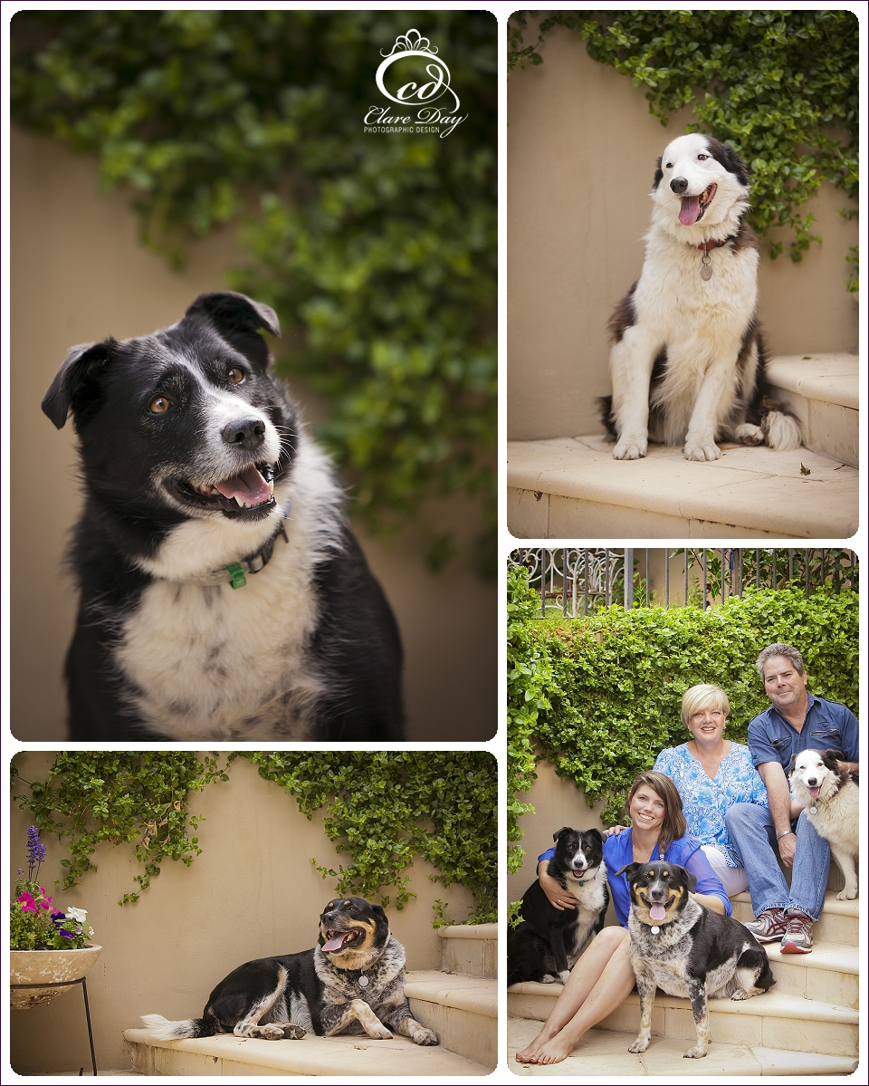 Bunbury Pet Photography