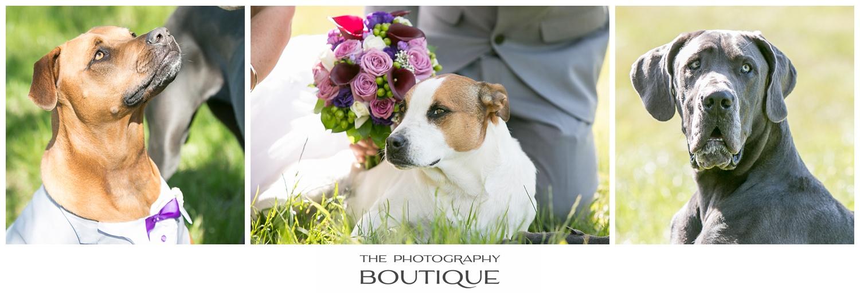 Dogs at a wedding in Bunbury