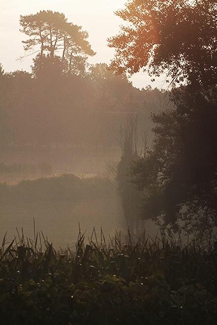 hazy early morning fields