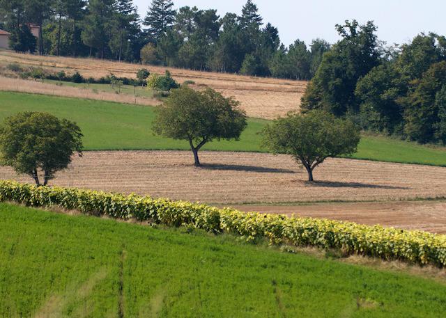 fields1.jpg