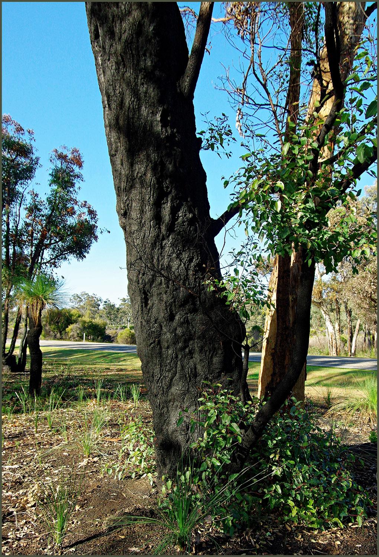 PopoTrip-Burnt Tree-01-1500y-c9.jpg