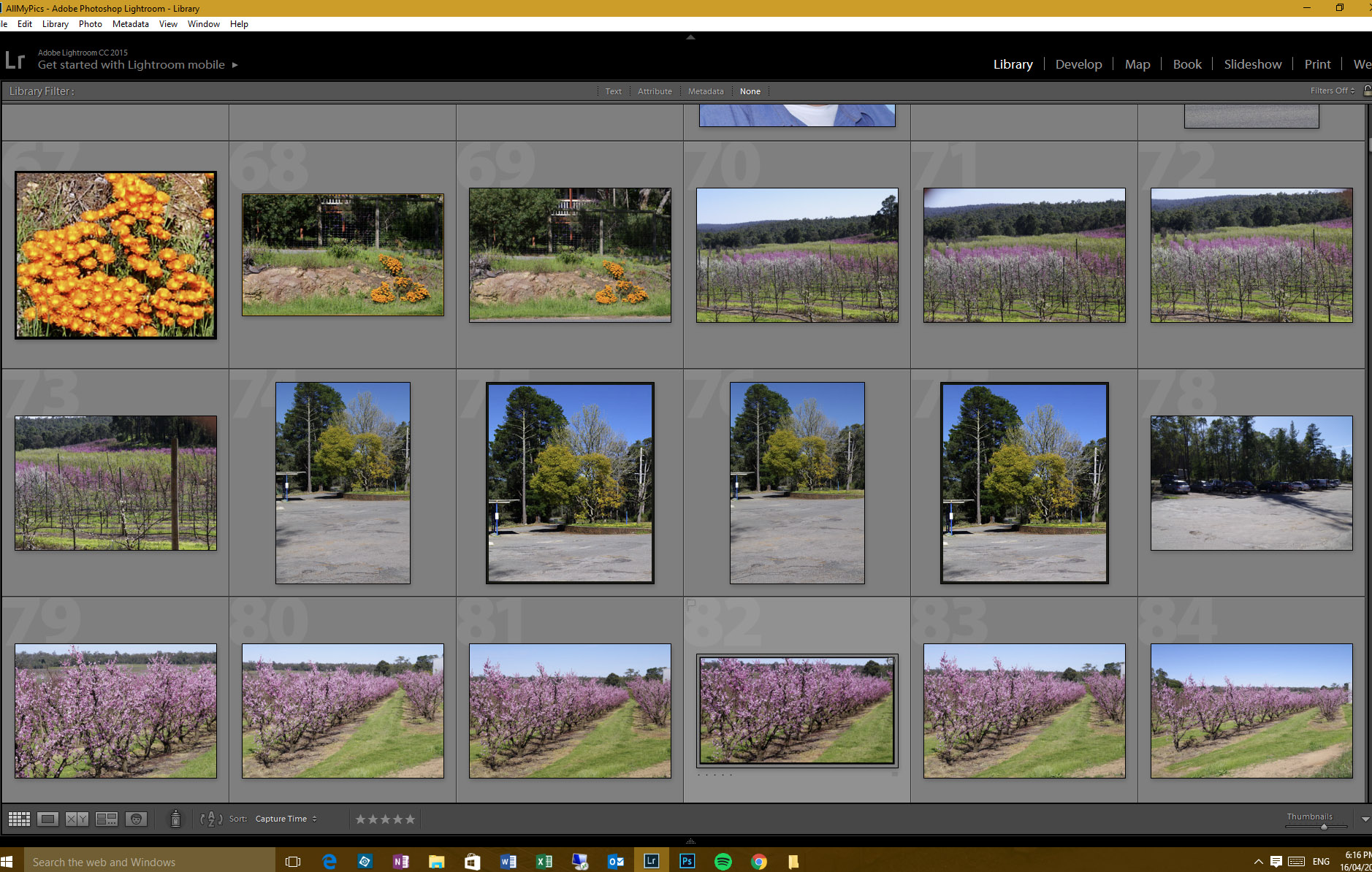 Lightroom standard thumbnail view preview page (showing 6 previews wide).