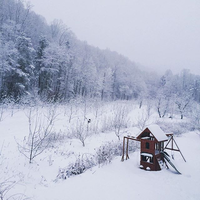 A magical snow covered orchard! 10inches and counting. #roanhighlands