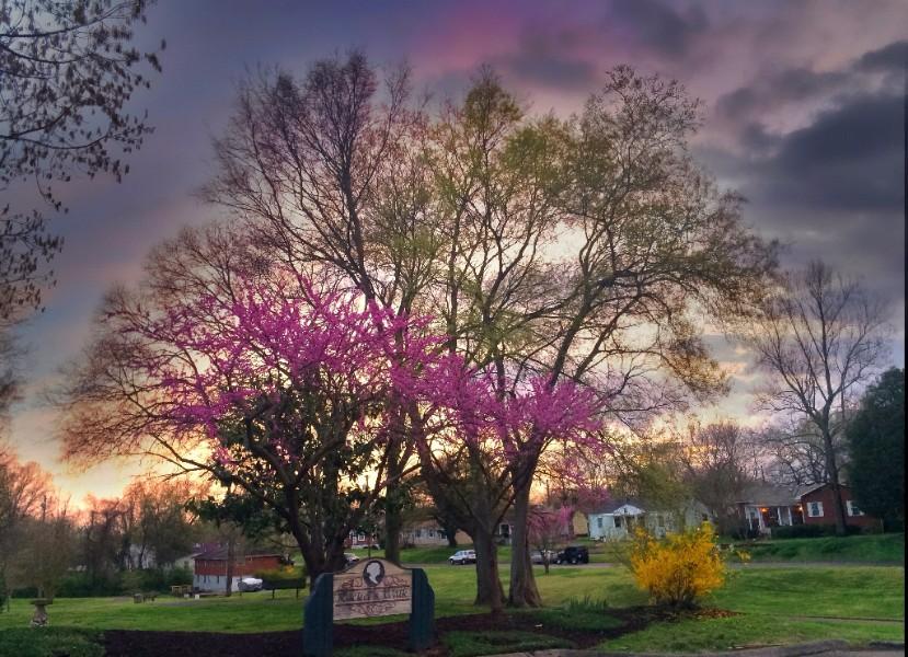 Spring has sprung  Photo ©Beau Jarred Schekeryk