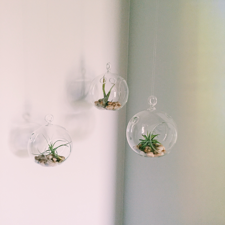 Hanging Terrarium Diy Jessica Rayome