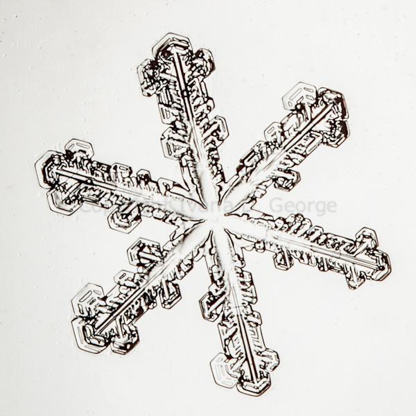 snowflakemelt2015-2.jpg