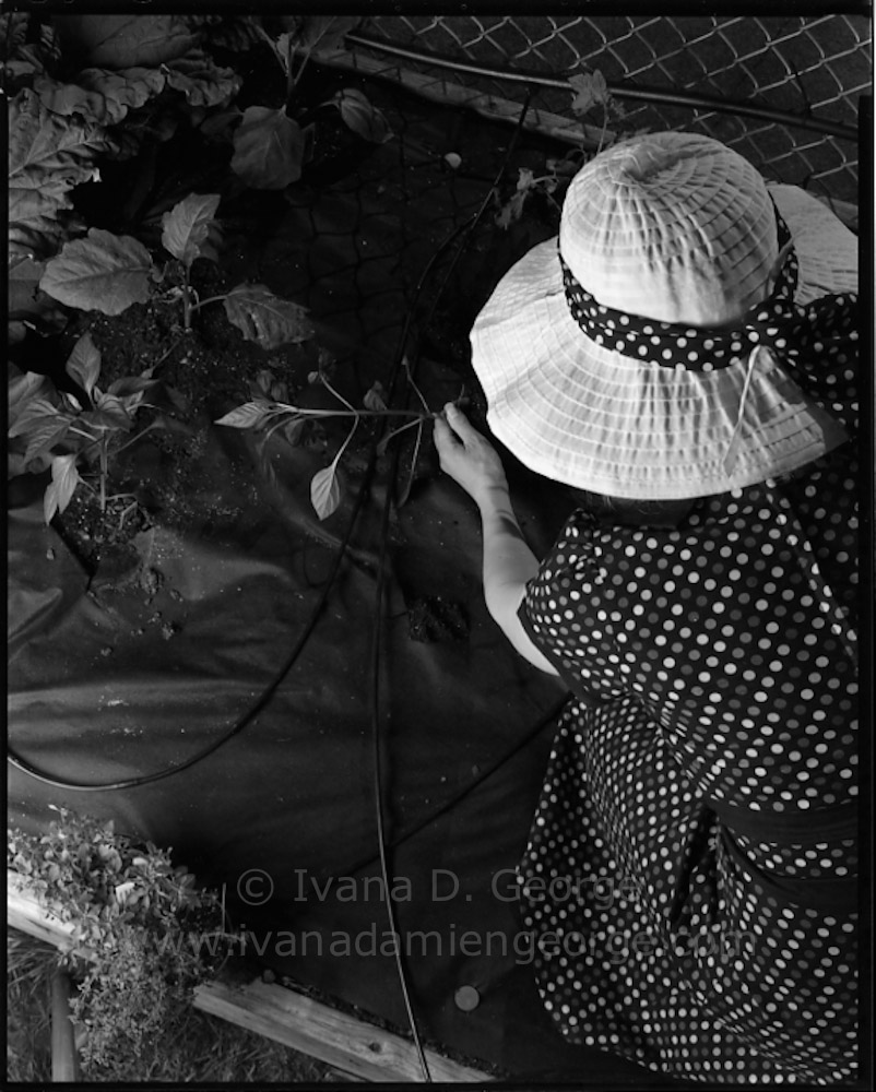 springgarden2015-040.jpg