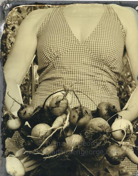 Root Vegetable Harvest in August