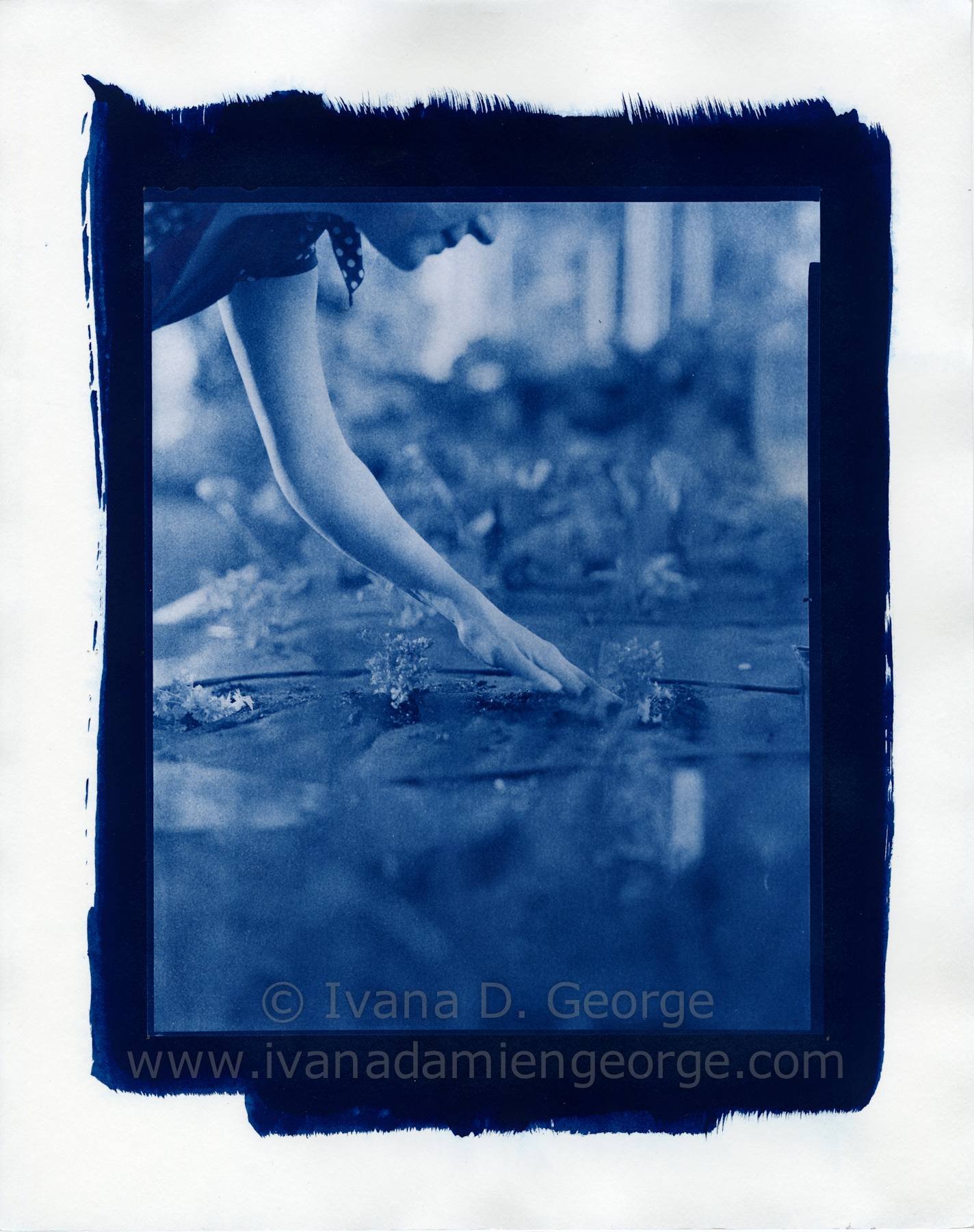 Shop Limited Edition Cyanotype Contact Prints