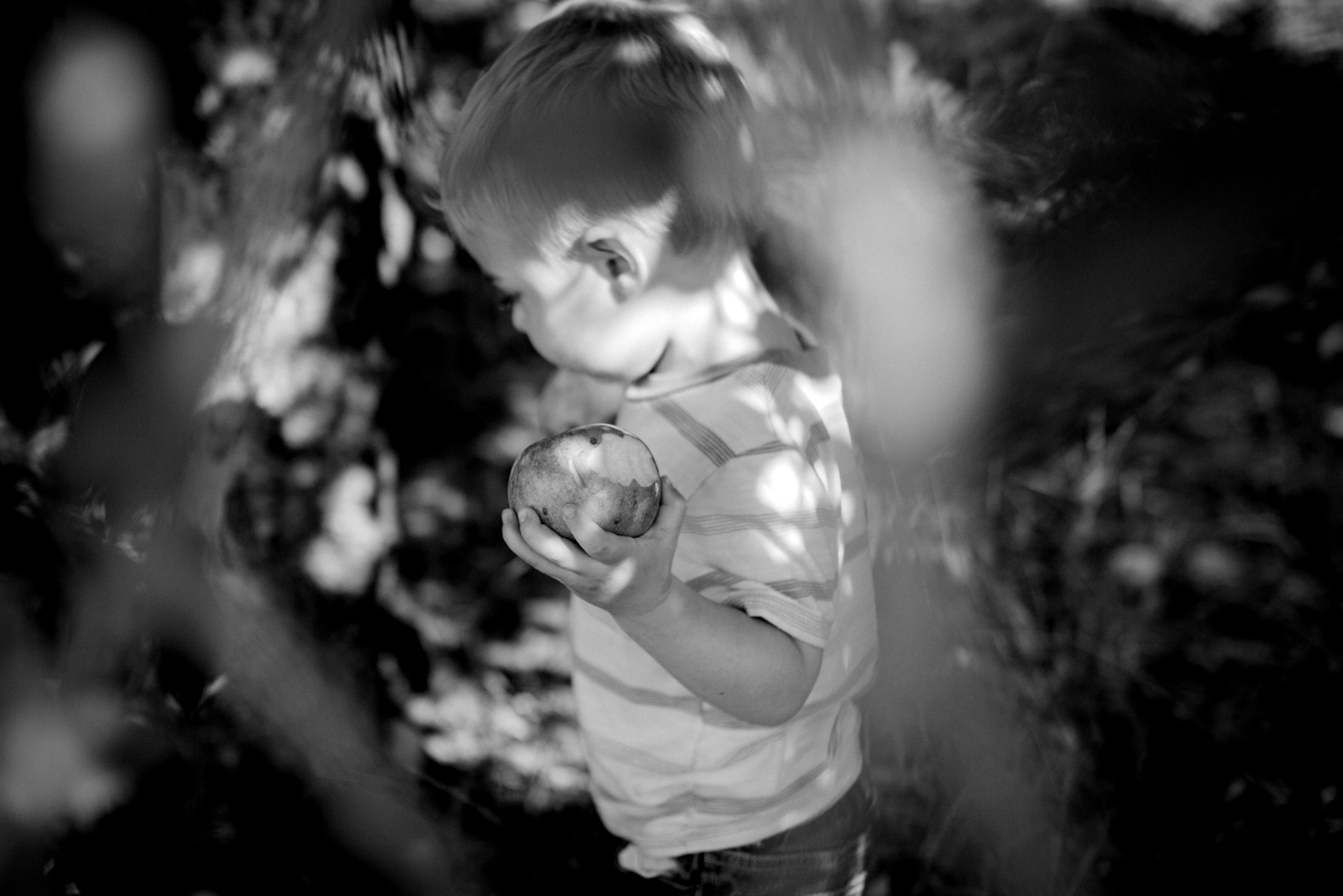 Rebecca Clair Photography, Kansas City lifestyle photographer, apple picking photo session, apple orchard photos, Kansas City family photographer, boy holding apples, black and white photo