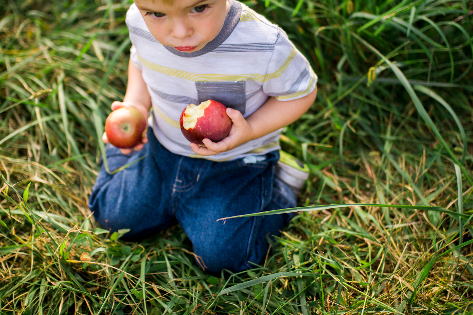 Rebecca Clair Photography, Kansas City lifestyle photographer, apple picking photo session, apple orchard photos, Kansas City family photographer, boy holding apples