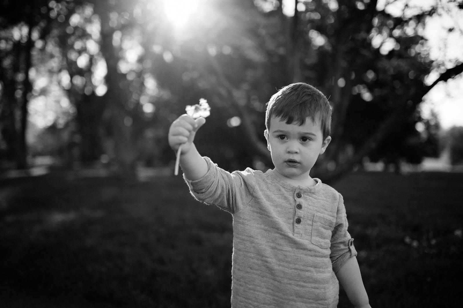 Black and white candid photo of a child holding a dandelion, Kansas City lifestyle photographer, Rebecca Clair Photography