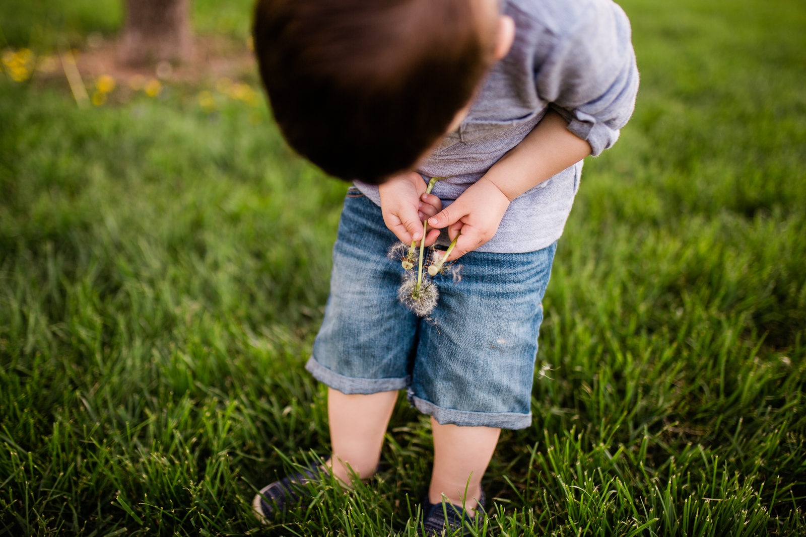 Boy holding dandelion, Kansas City family photography at Loose Park, Rebecca Clair Photography