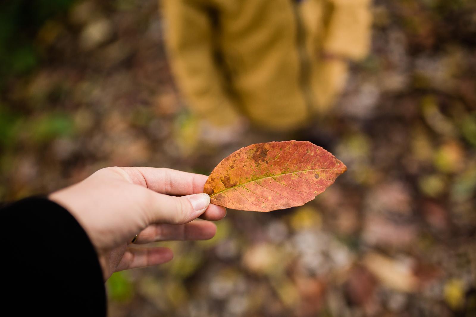 Hand holding autumn leaf, autum walk in the woods, Kansas City fall photos
