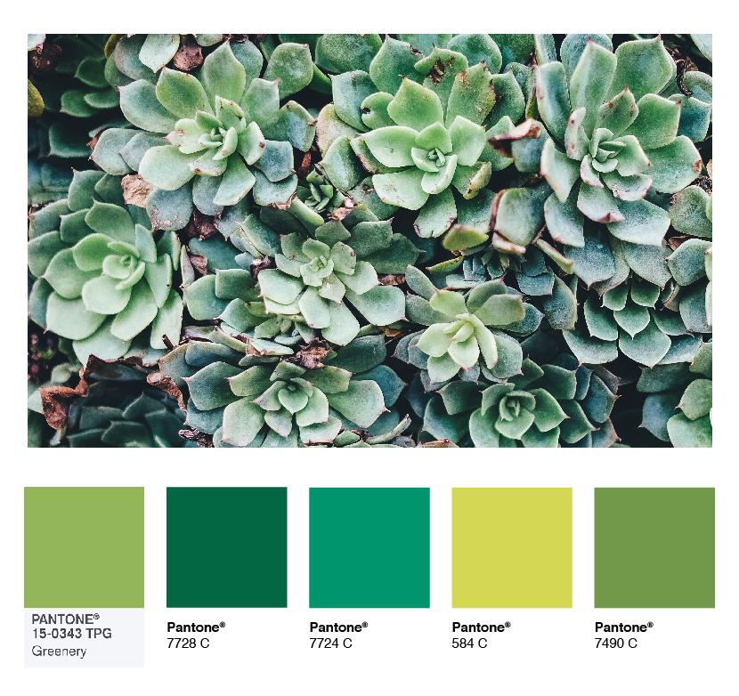 color-palette-succulents.jpg