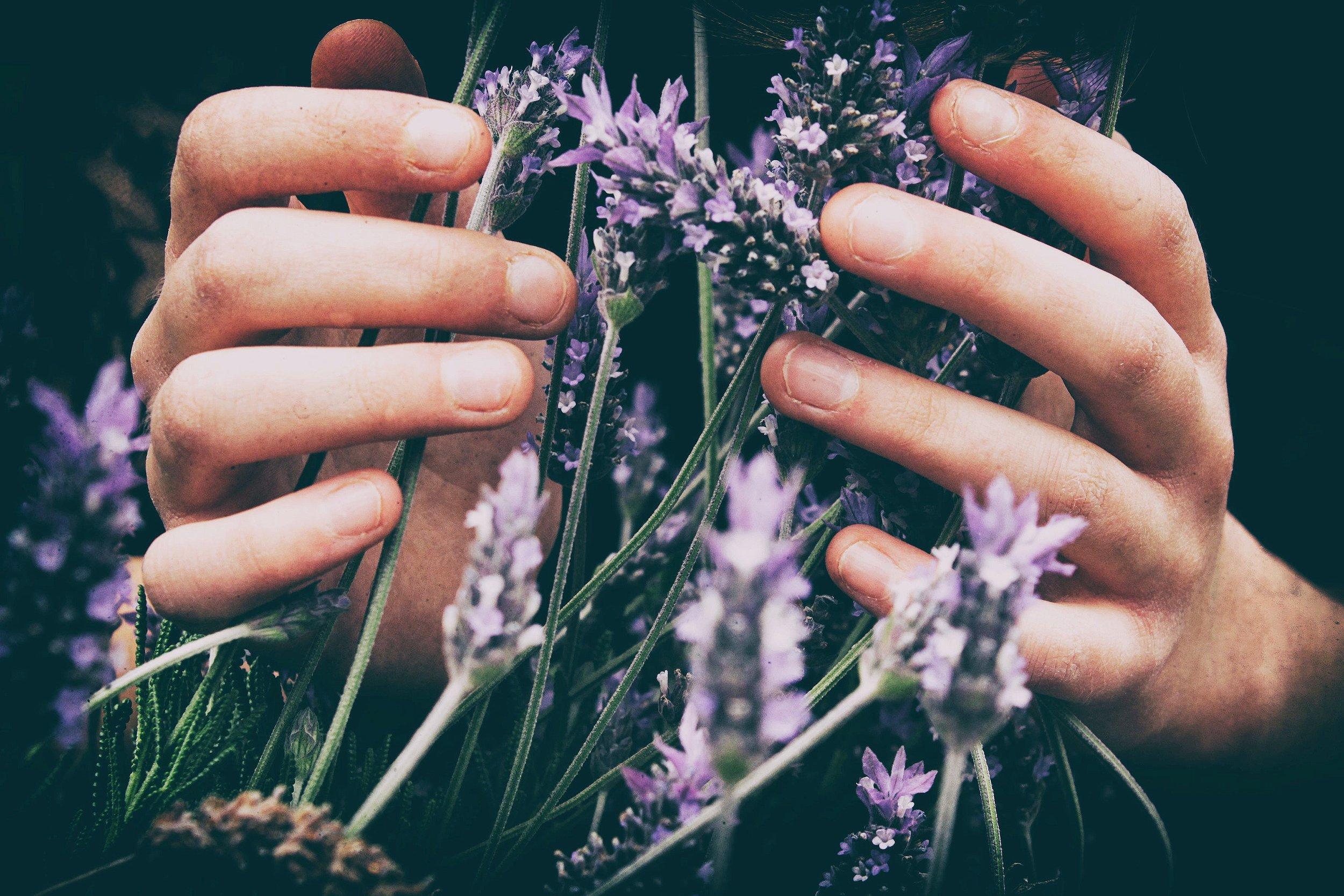 Lavendar and Hands.jpg
