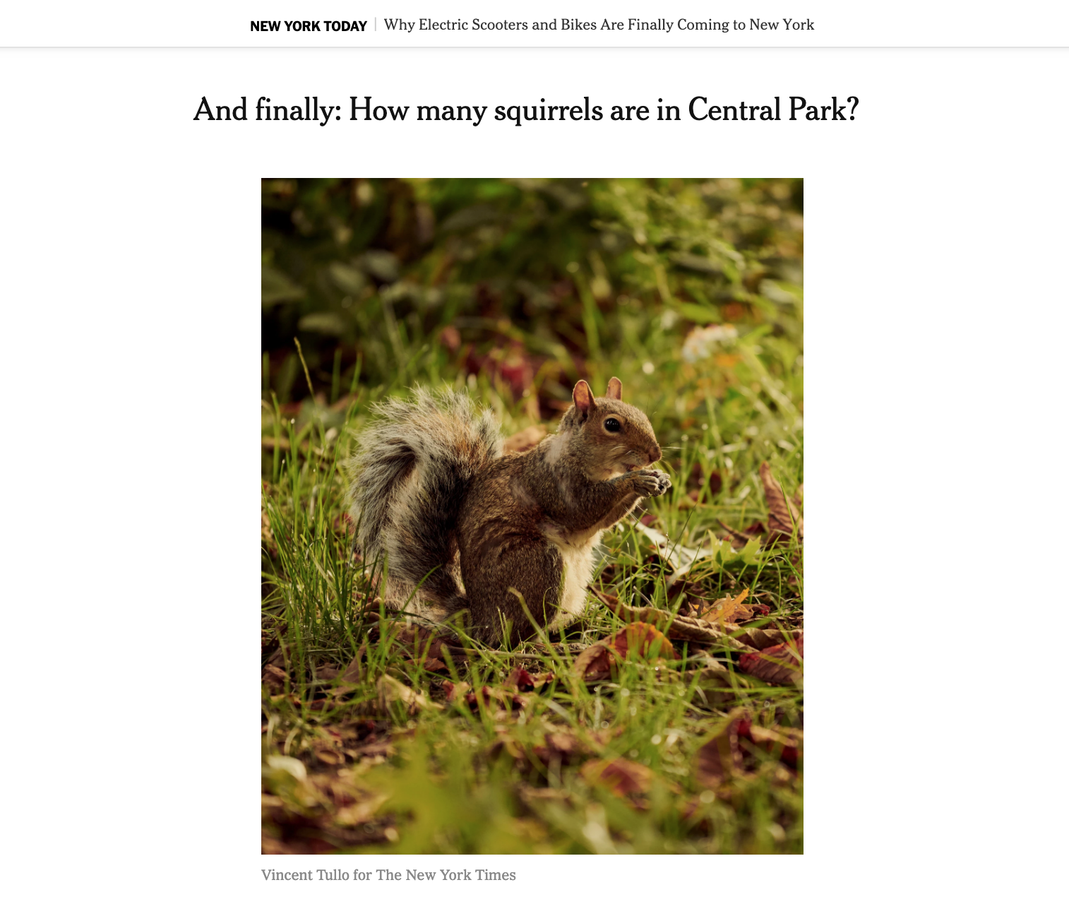 And finally: How many squirrels are in Central Park? - The New York Times