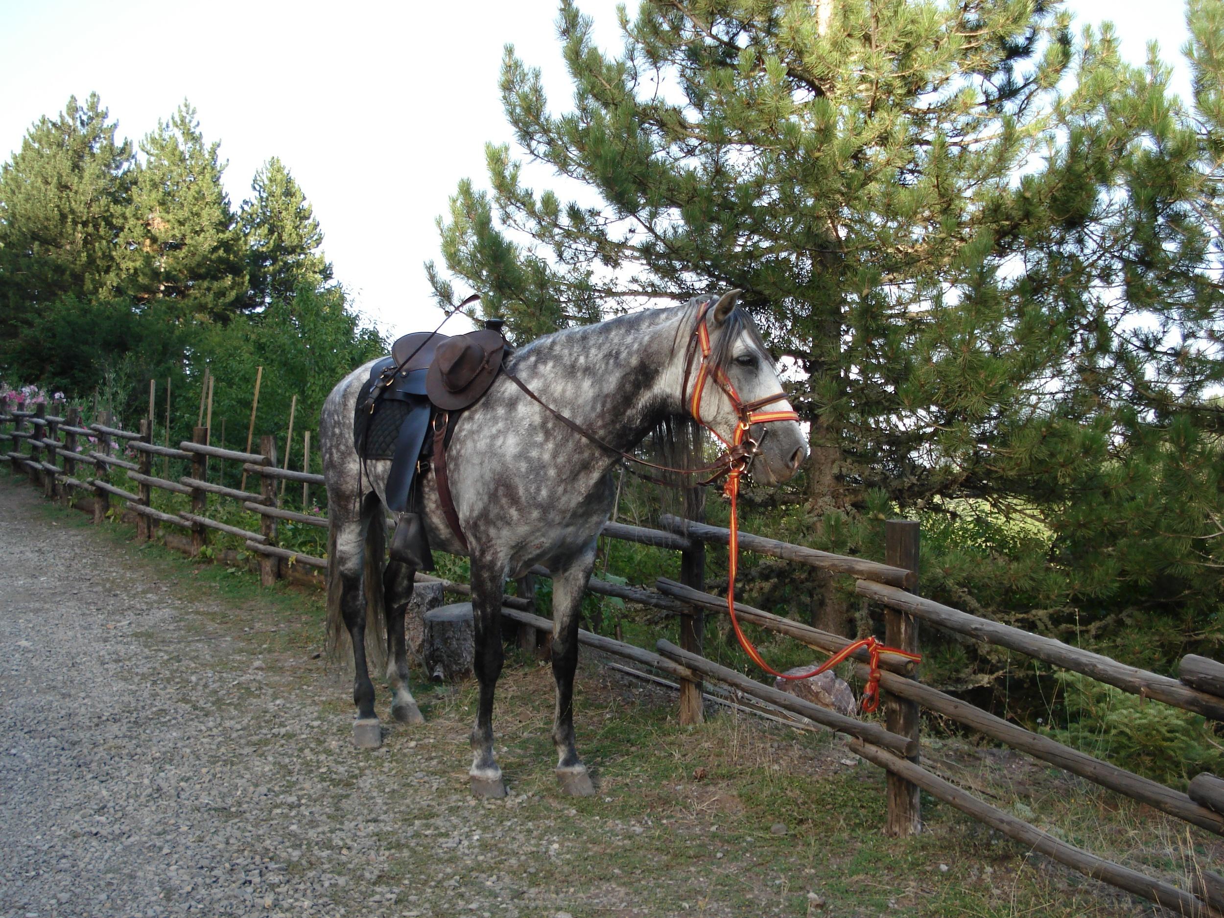 miholitsis horse.jpg
