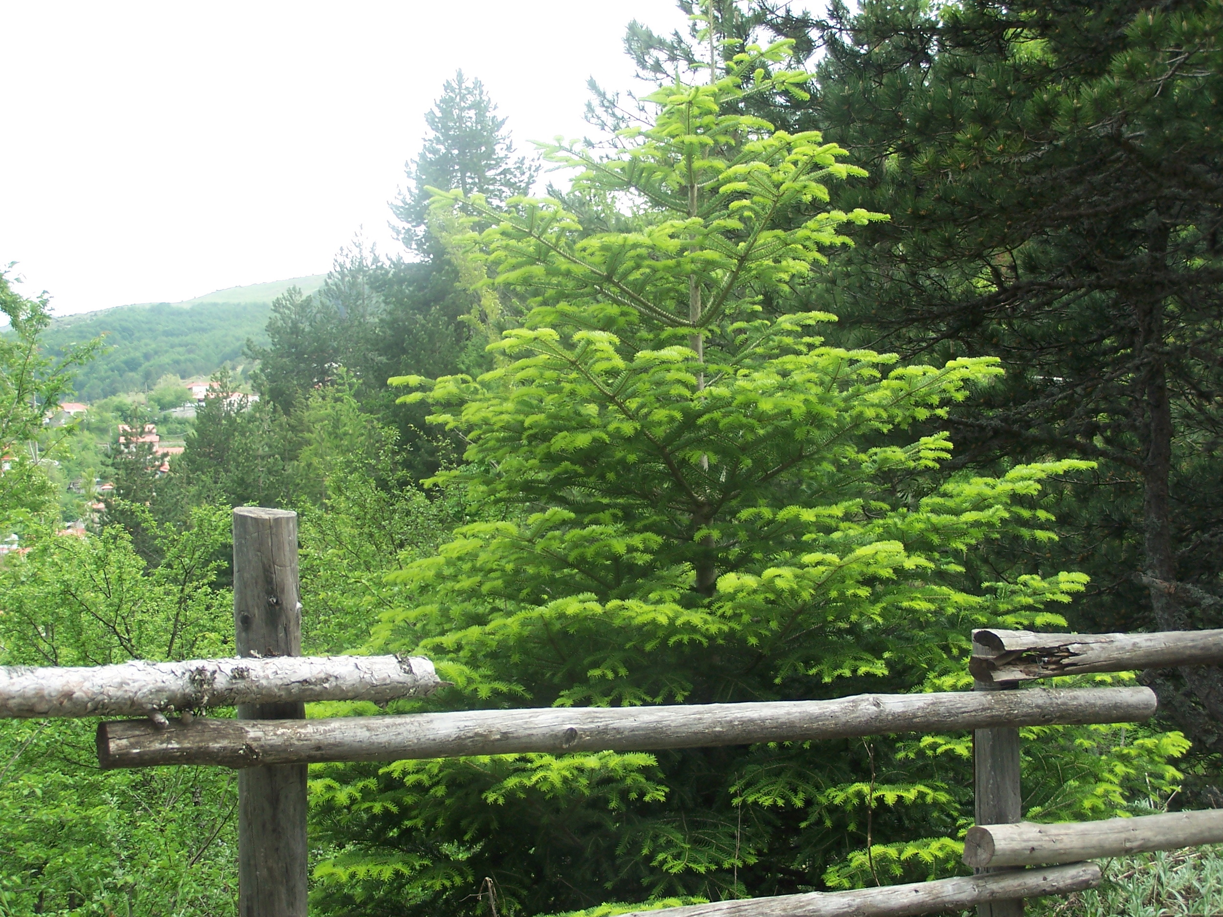 woodenfence_tree_spring.jpg