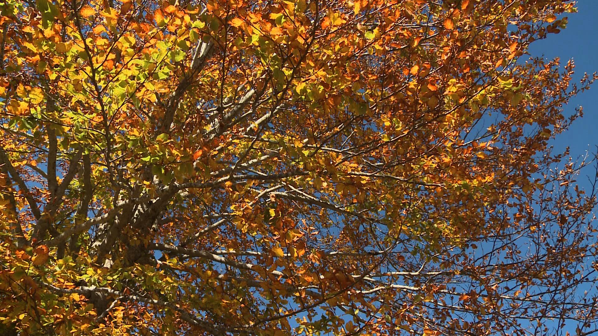 tree_fall.jpg