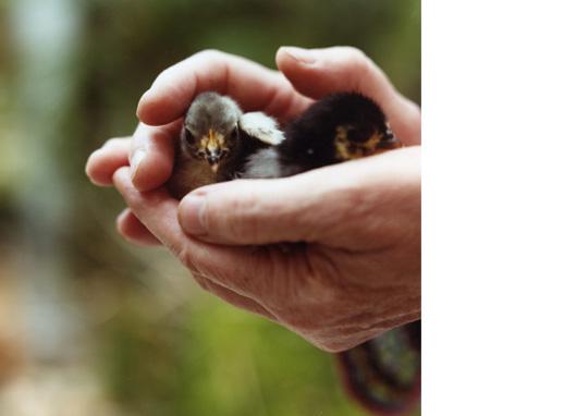 Untitled, 2009  (Pip's baby birds) C-print